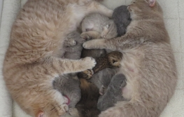 A pile of Pampurred kittens!
